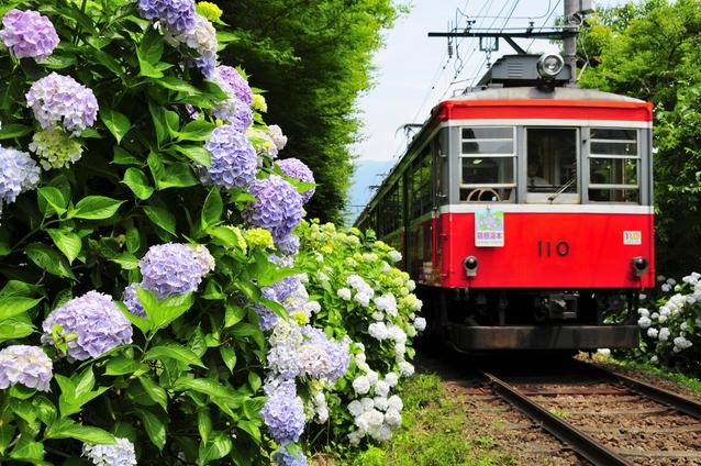 7月23日(木)!いよいよ箱根登山鉄道運転再開!!