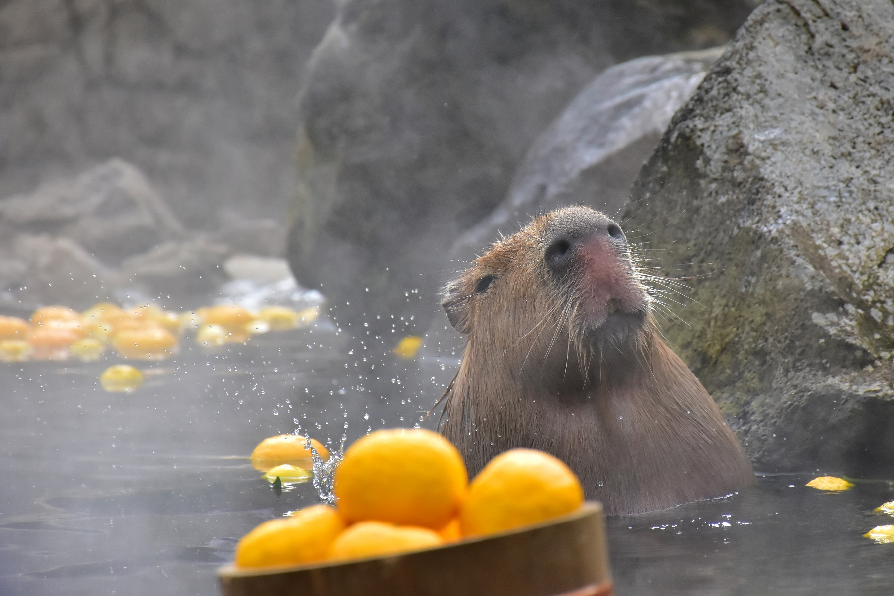 元祖カピバラさんの露天風呂♨